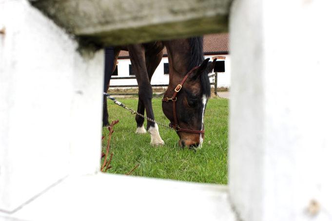 Bild på häst som betar